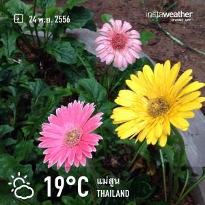 Garden_015