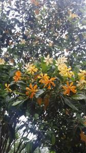Garden_025